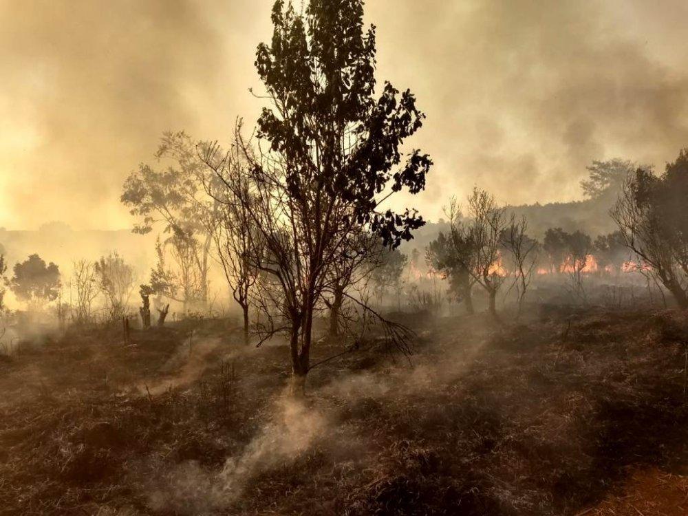 Incendios-en-Esperanza-3.thumb.jpg.fb5bd8d221ab01b7fa3b2600f723cdd8.jpg