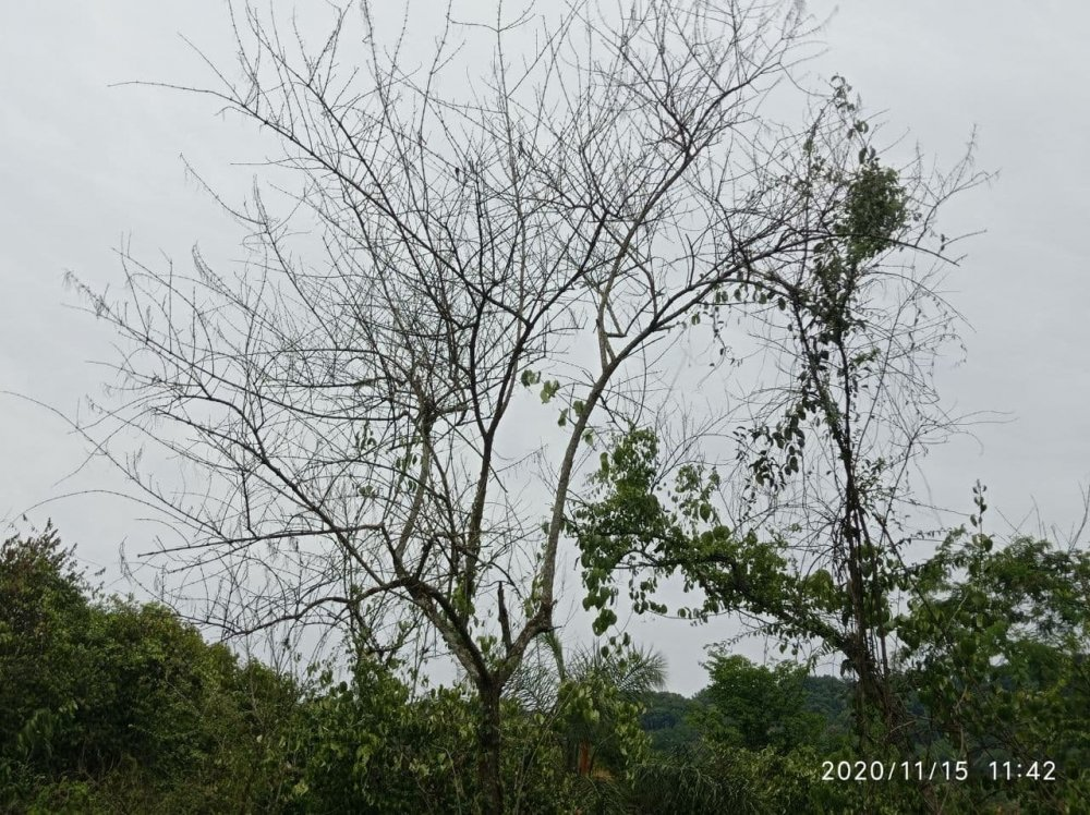 photo_2020-11-15_12-03-01.thumb.jpg.fe6f62200938e5bd574ce88606c0bcf0.jpg