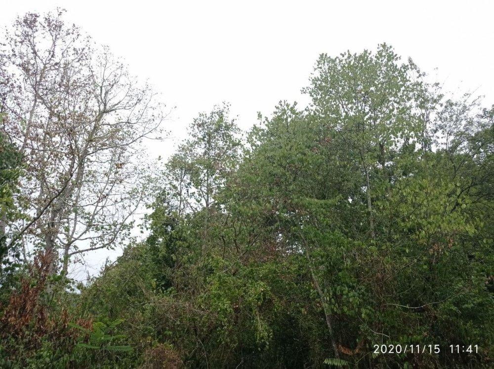 photo_2020-11-15_12-03-10.thumb.jpg.34d5e7a329a0ecf3280344af44d19ebb.jpg