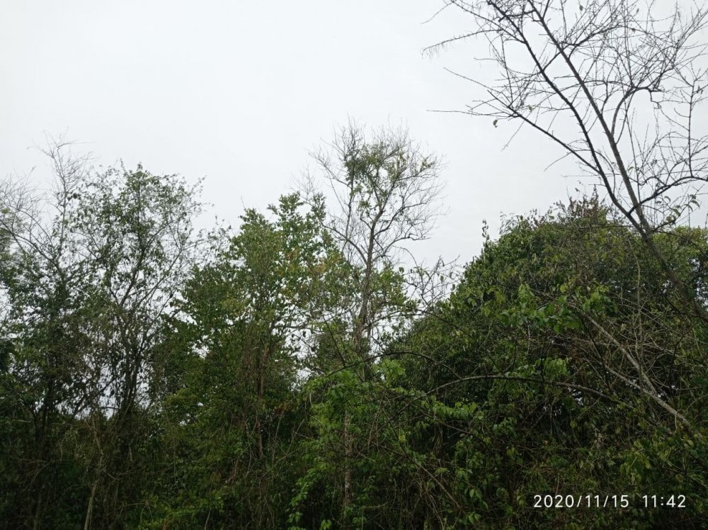 photo_2020-11-15_12-03-13.thumb.jpg.e89bd12123f3bbbfc19afa5121c8ab66.jpg